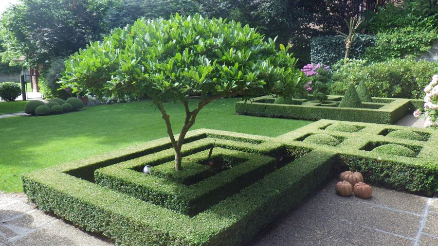 Jardinier bernard franssen taille arbres et haies for Devis taille haie